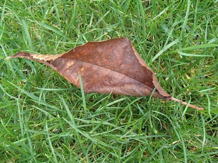 FOTKA - suchý list