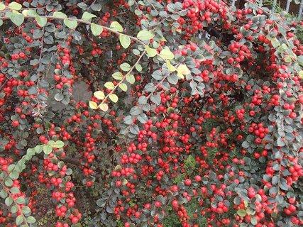 FOTKA - 2012 farby jesene26
