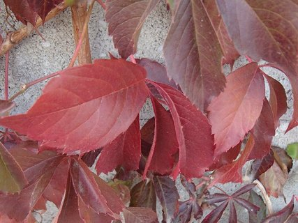 FOTKA - 2012 farby jesene28