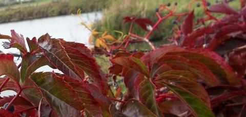 FOTKA - Podzim barví 2