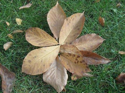 FOTKA - kvetinka z lístia