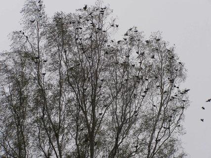 FOTKA - ptáci