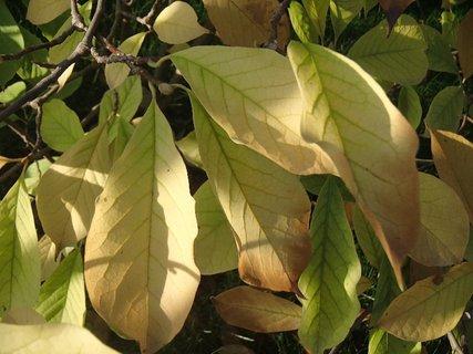 FOTKA - 2012 farby jesene39