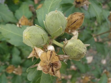 FOTKA - jesenné plody.....