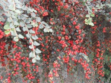 FOTKA - jesenné plody......