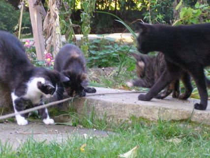 FOTKA - kočičáci při hře