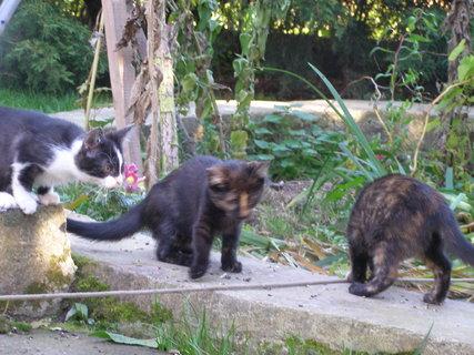 FOTKA - kočky+provázek