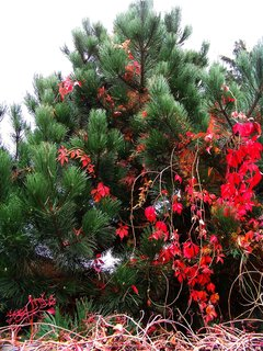 FOTKA - 25.10.12, skoro jako vánoční stromek...