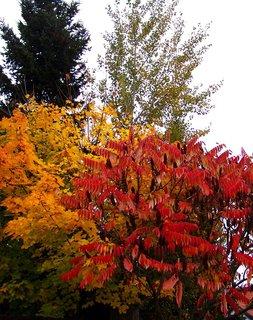 FOTKA - 25.10.12, podzim v plném proudu..
