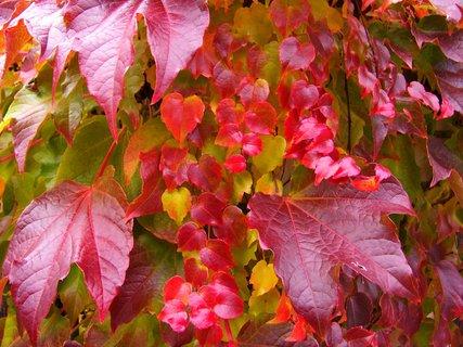 FOTKA - 25.10.12, barevný sloupek plotu..