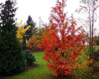 FOTKA - 25.10.12, podzimní zahrádka...