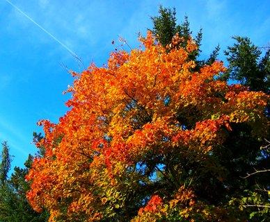 FOTKA - 25.10.12, na kraji lesa..
