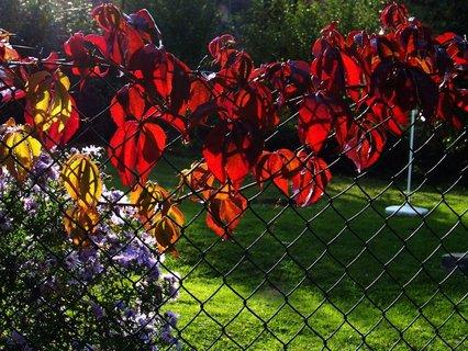 FOTKA - 25.10.12, barevný plot zahrádky ve slunci...
