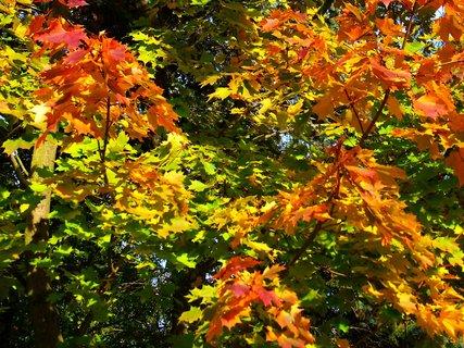 FOTKA - 25.10.12, podzim u lesa...
