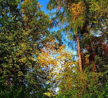 FOTKA - 25.10.12, barvící se les...