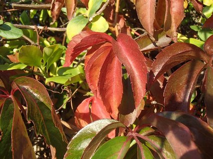 FOTKA - 2012 farby jesene48