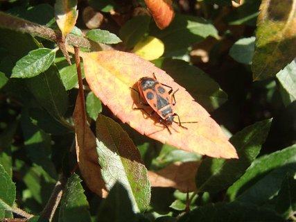 FOTKA - chrobák sa vyhrieva na slniečku
