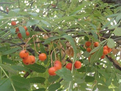 FOTKA - jesenné plody........