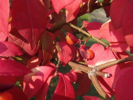 FOTKA - jesenné plody.........