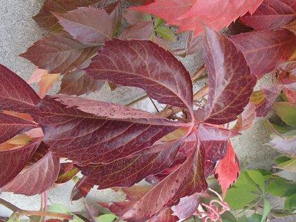 FOTKA - 2012 farby jesene53