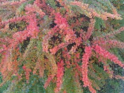 FOTKA - jeseň farbí