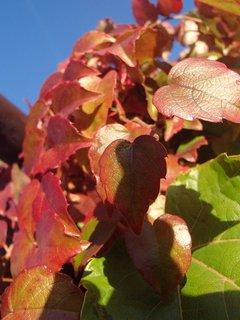 FOTKA - jeseň farbí.
