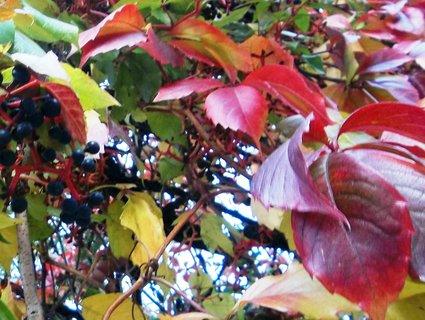 FOTKA - Podzim barví 5