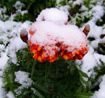 FOTKA - 27.10.2012, a už jsou celé pod sněhovou čepicí..