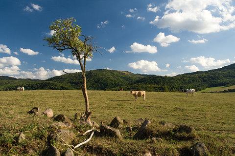 FOTKA - Na pastvinách...