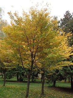 FOTKA - 2012 farby jesene60