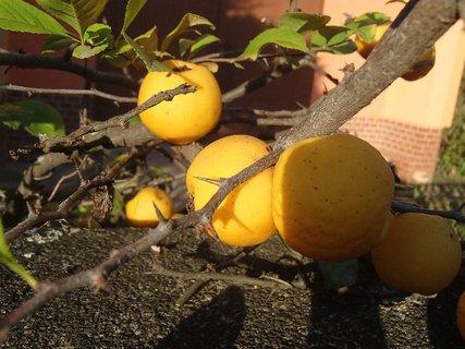 FOTKA - plody jesene2