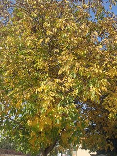 FOTKA - 2012 farby jesene63