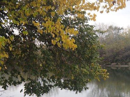 FOTKA - pri rieke.