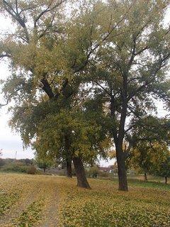 FOTKA - jesenná cestička