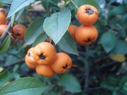 FOTKA - plody jesene7