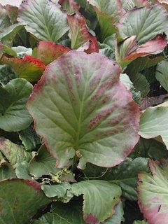 FOTKA - farby listov