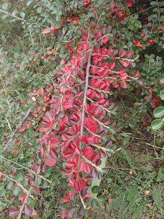 FOTKA - 2012 farby jesene64