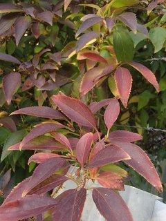 FOTKA - 2012 farby jesene65