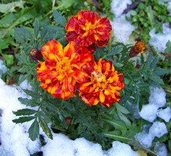 FOTKA - 28.8.2012, napadaný sníh včera roztál..