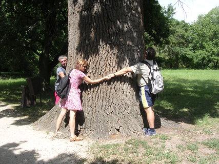 FOTKA - strom