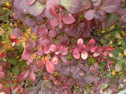 FOTKA - 2012 farby jesene66