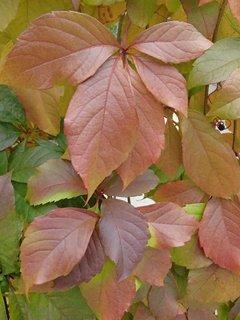 FOTKA - 2012 farby jesene67