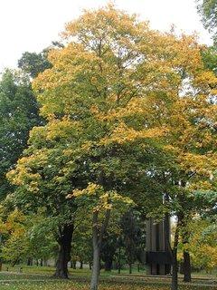 FOTKA - strom v parku