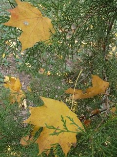 FOTKA - zachytené spadnuté listy