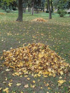 FOTKA - pohrabané  jesenné lístie