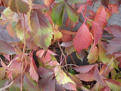 FOTKA - 2012 farby jesene68