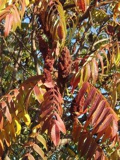 FOTKA - jeseň hrá farbami