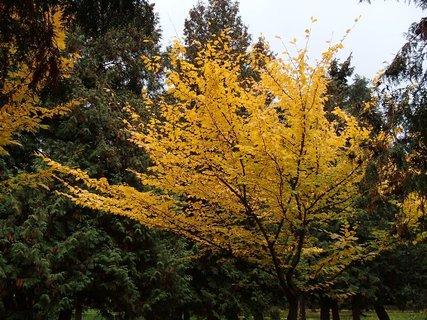 FOTKA - 2012 farby jesene74