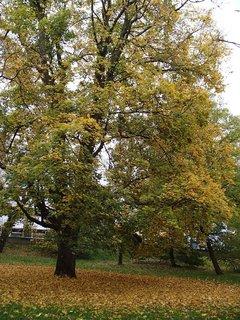 FOTKA - strom v parku.