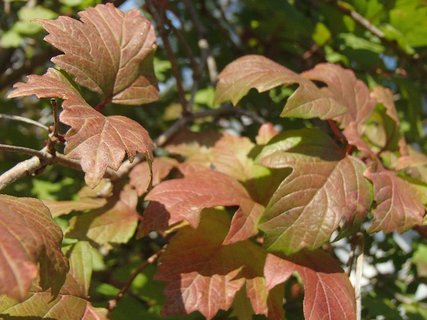 FOTKA - 2012 farby jesene83